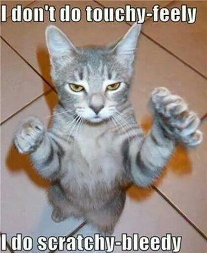 PageLines-Bad-Cat-Meme2.jpg