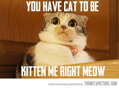 PageLines-Funny-Cat-Meme-Work-1.jpg